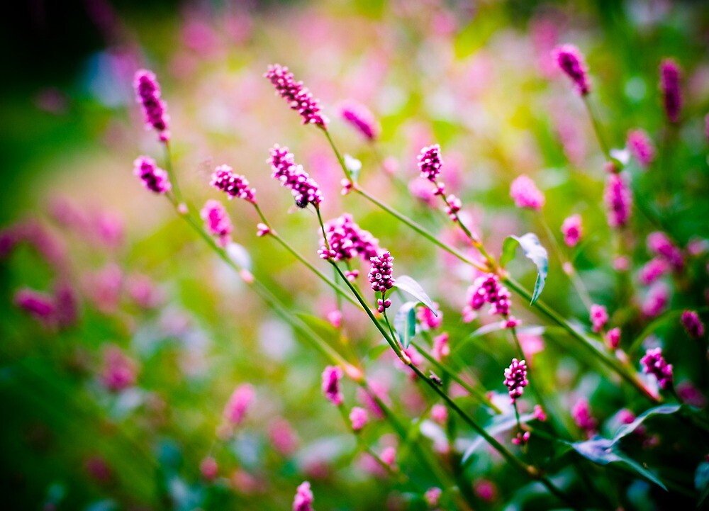 pretty in pink by Charlie Trotman