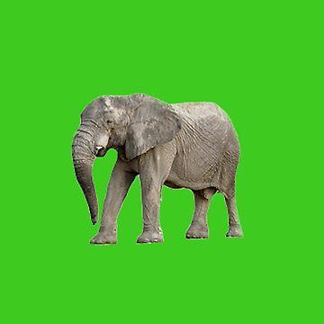 Just a Elephant  by roggcar