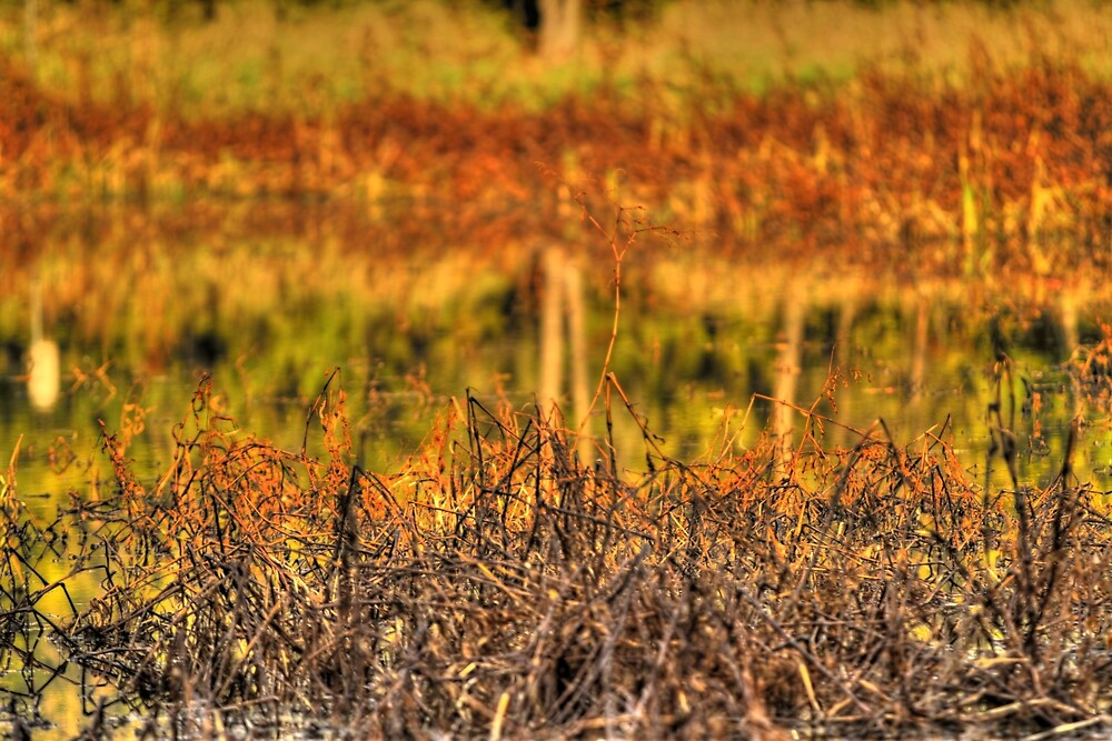 Fall Weeds On the Pond by Bob Purdy
