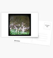 Petals Postcards