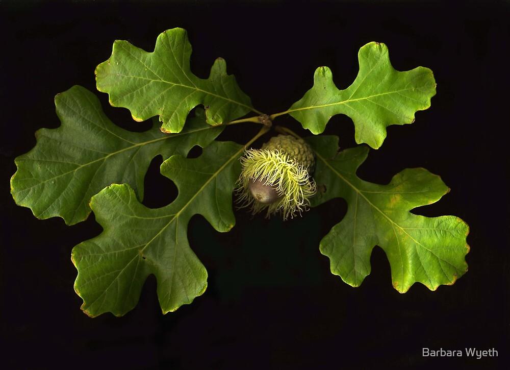 Burr Oak by Barbara Wyeth
