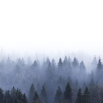 Morning fog in the forest by helgema