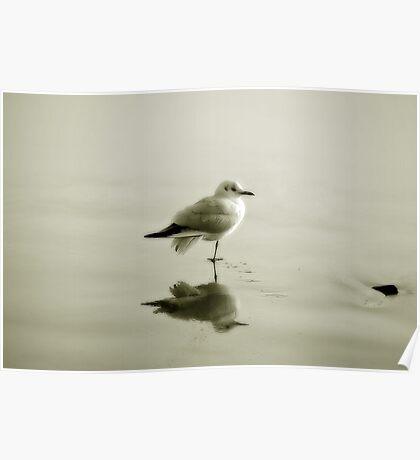 Bird reflection Poster