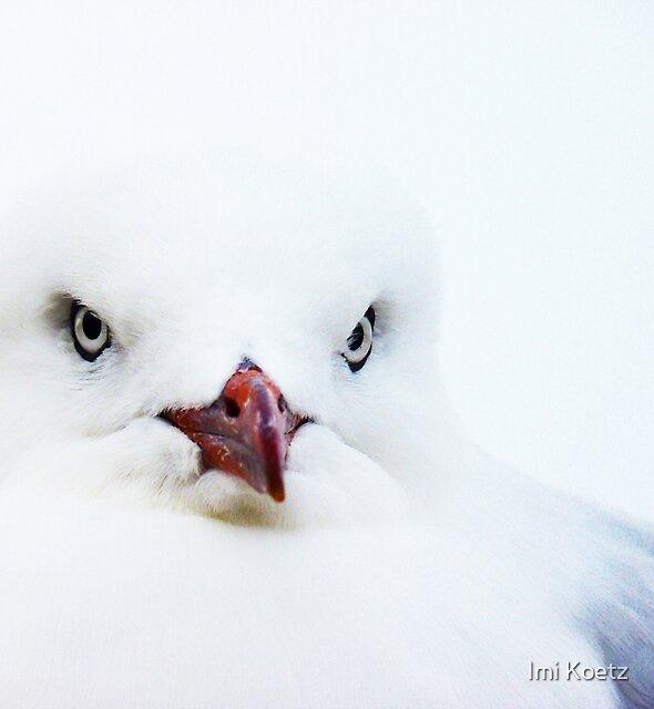 Seagull at Tasmania's East Coast by Imi Koetz