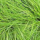 A Swirl of Grass III by Mike Solomonson