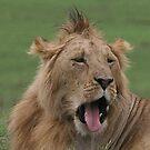 The Lion King by John Dalkin