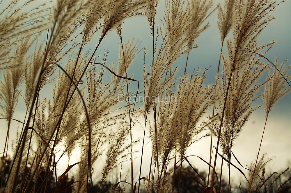 Windy by DeannaLyn
