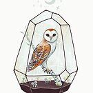 Barn Owl by freeminds