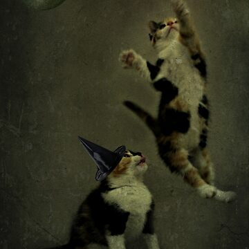 That`s not a stickybroom! by Ladymoose