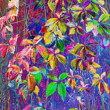 Multicolored ivy leaves taken closeup as nature background.  by IaroslavB