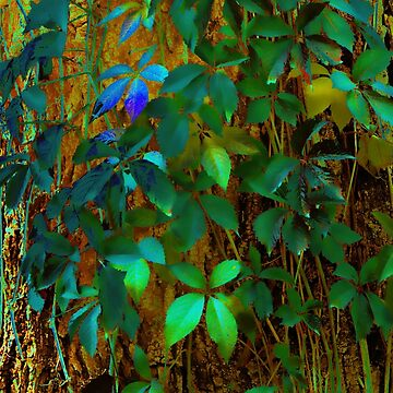 Color ivy leaves taken closeup as nature background. by IaroslavB