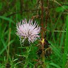 wild flower by dutchessphoto85