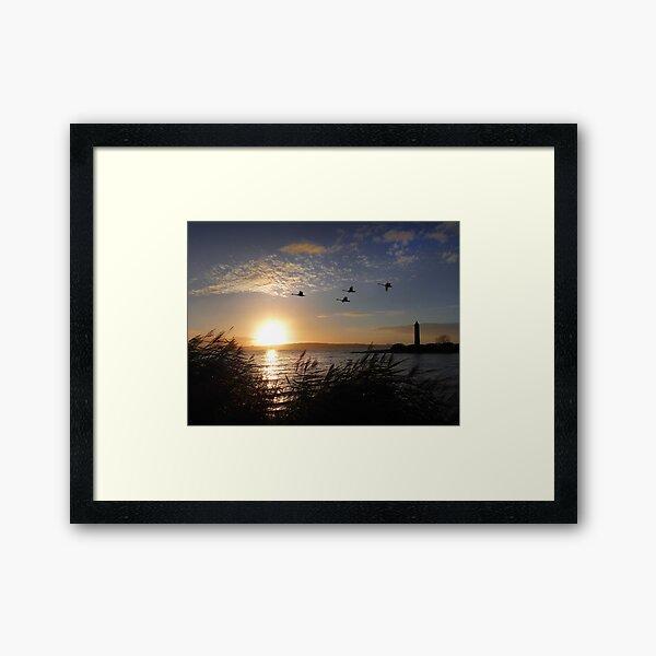 Pencil Sunset Swans Framed Art Print