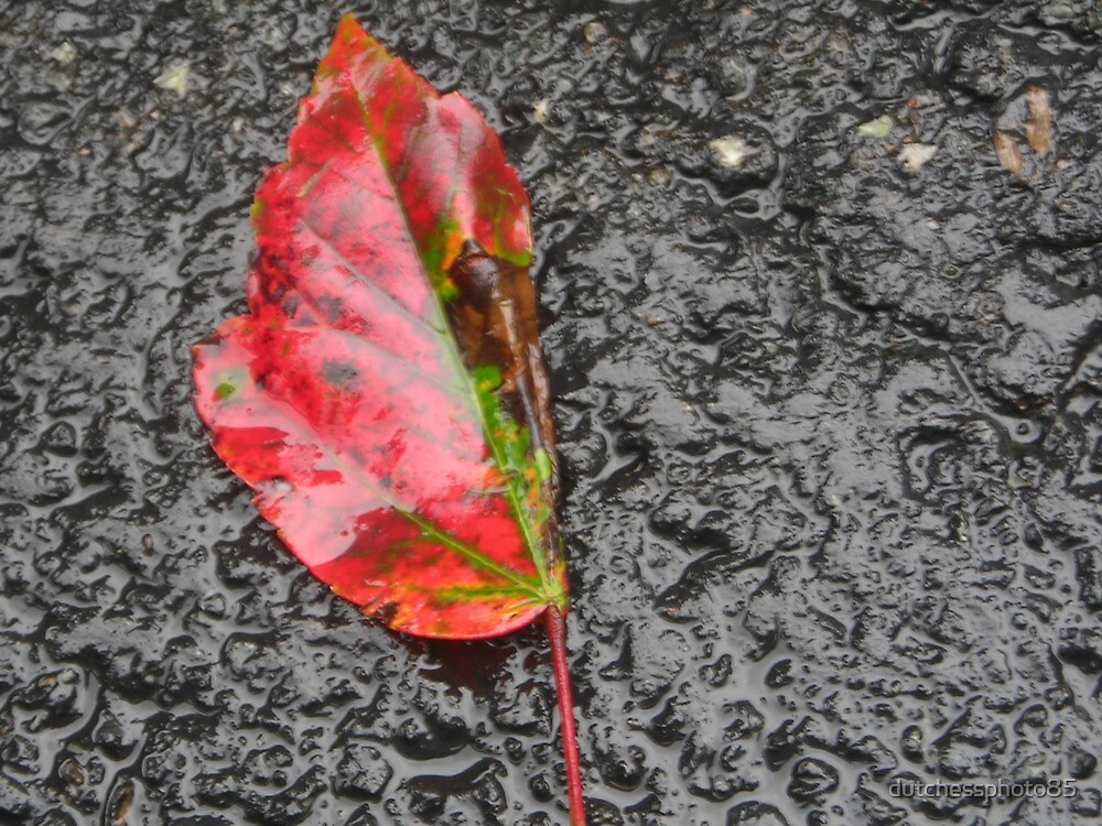 colors of fall by dutchessphoto85