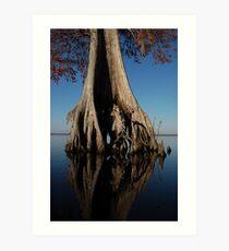 Bald Cypress Art Print