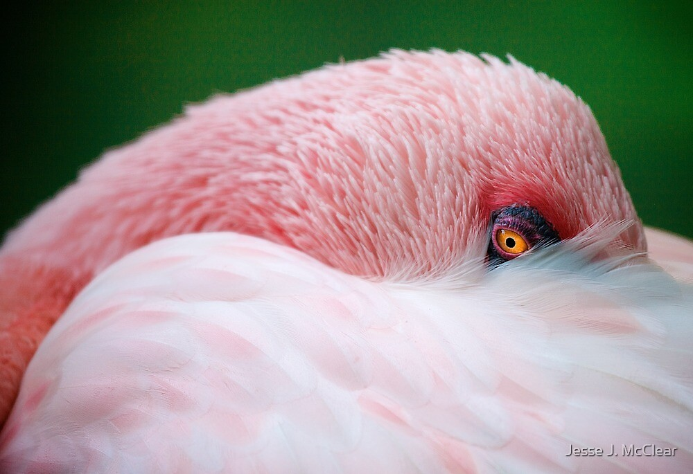 Flamingo 2 by Jesse J. McClear