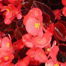 Rainy Flowers by dutchessphoto85