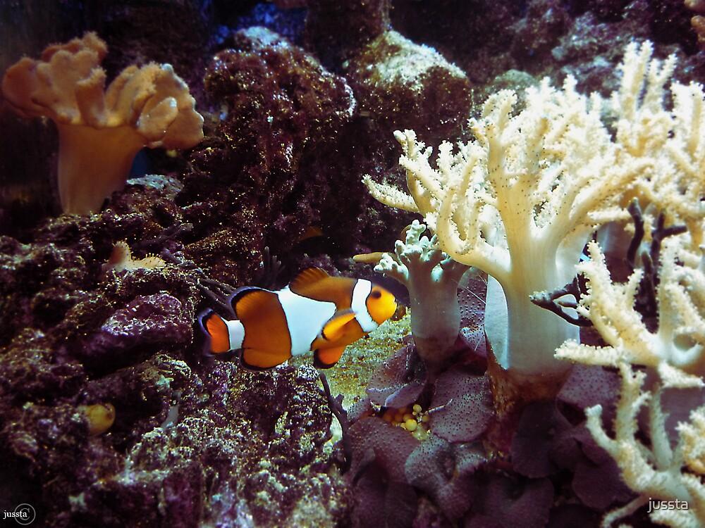 Found Nemo by jussta