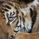 Baby Tiger by Pinkanna1980
