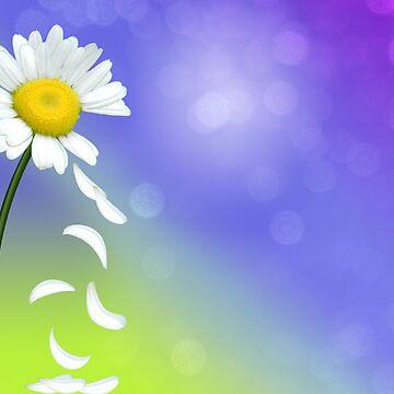 Daisy Petals by BuzzEdition