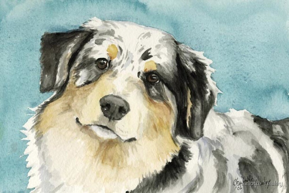 Australian Shepherd by Charlotte Yealey