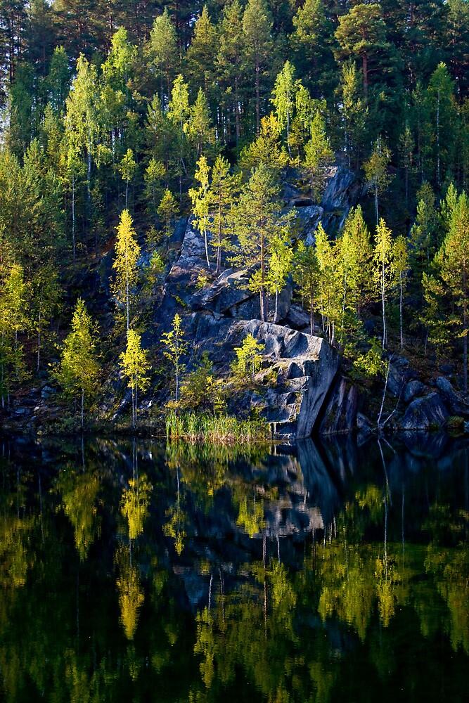 Taiga Forest Reflection by Karen Millard