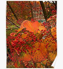 Fall at Winterthur Poster