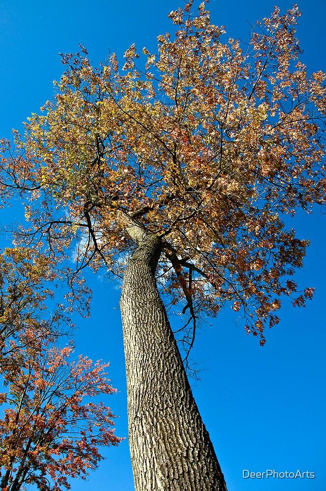 Climb This Tree Please! by DeerPhotoArts