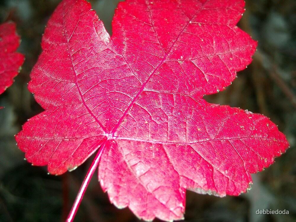 Red Leaf by debbiedoda