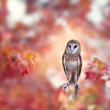 Barn owl perching in the autumn forest by svetlanna