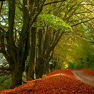 Country Lane in Autumn by lightmonger