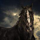 Equus by carol brandt