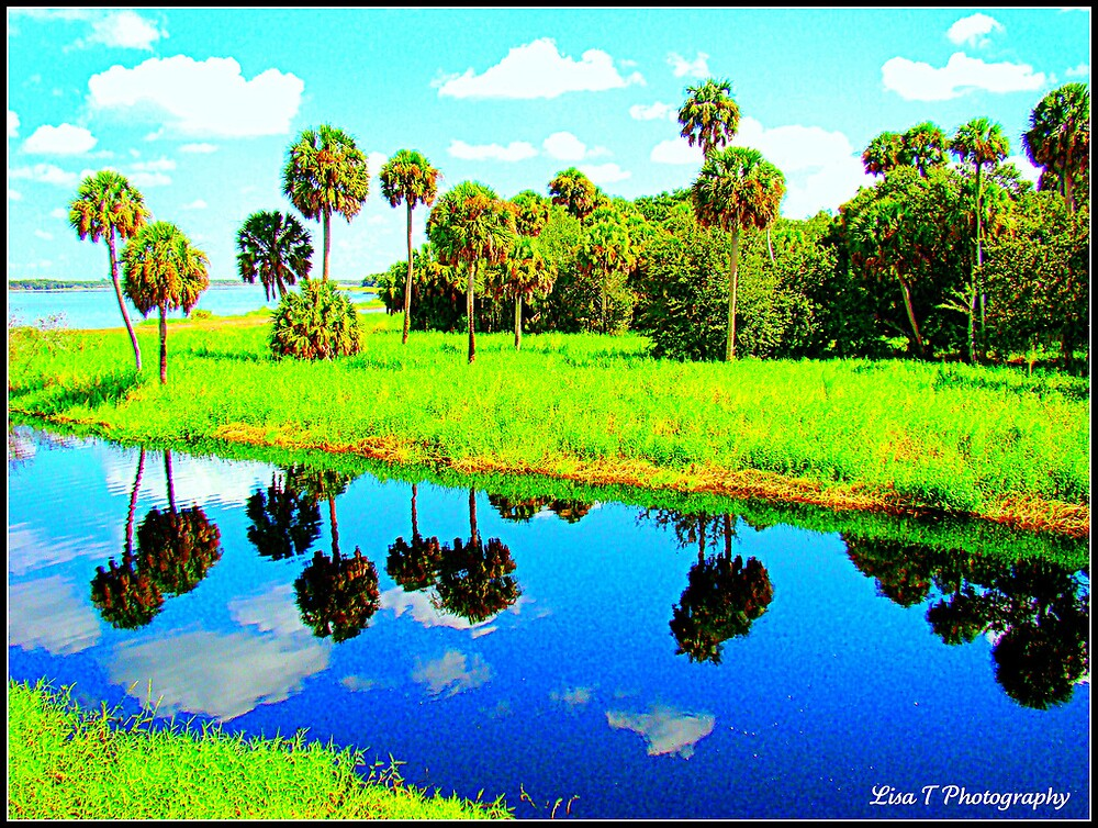 Palms by Lisa  Trans