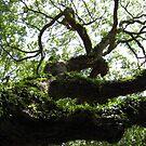 Angel Oak by SpaceKace