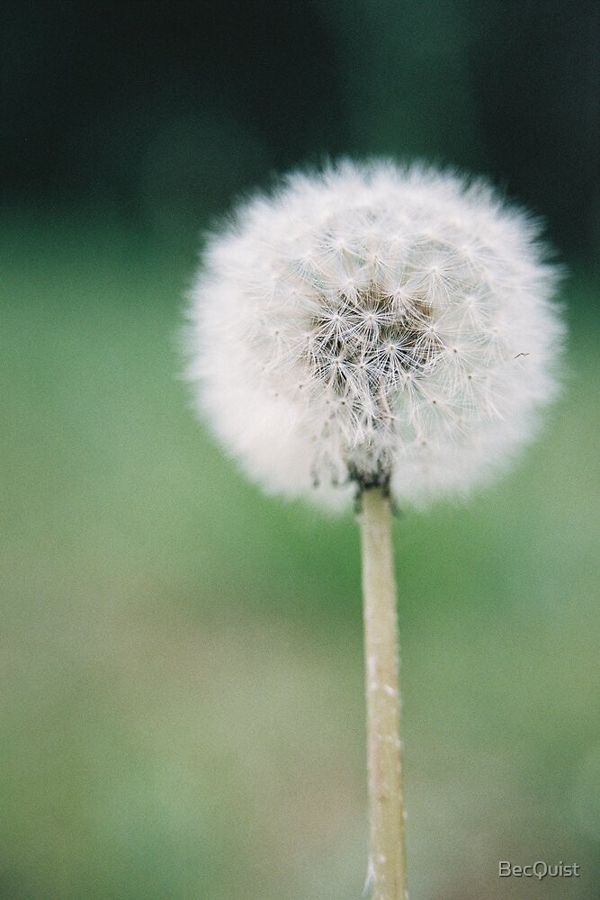 Blow for a Wish by BecQuist