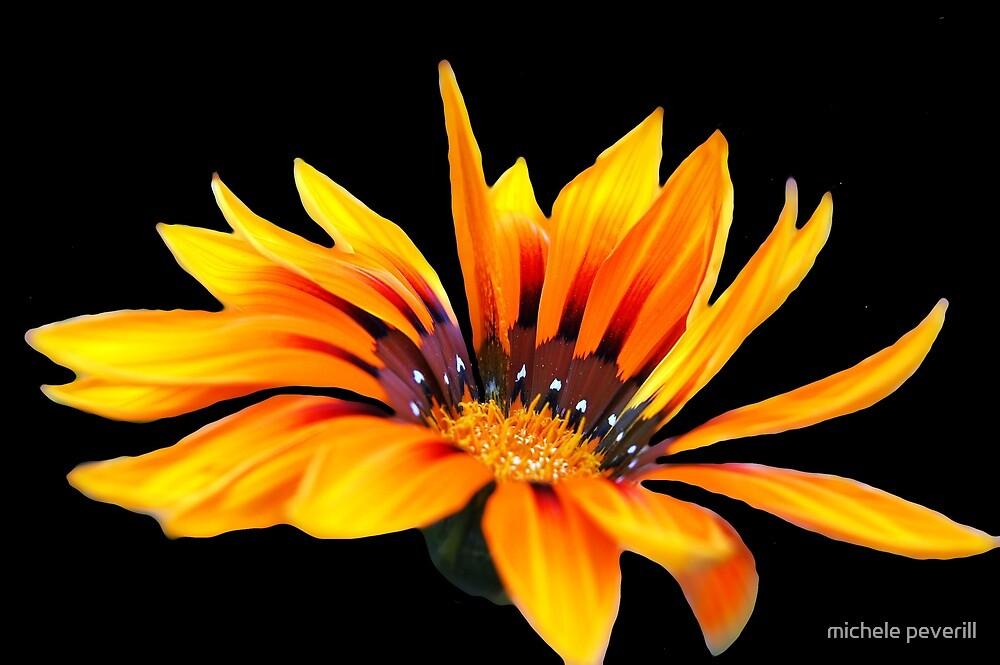 flower by michele peverill