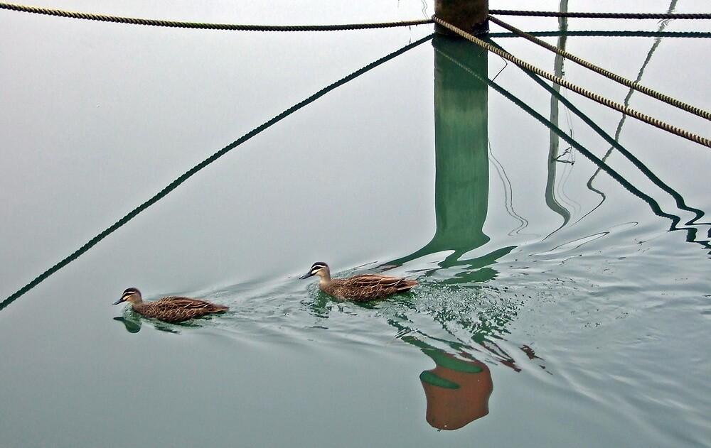 Happy as a duck in water. by Bernard (Ben)  Bosmans