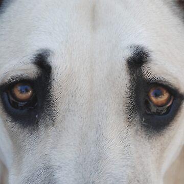 """Sadie - """"Look into my eyes!"""" by nkentb"""