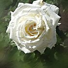 """""""What's in a name? That which we call a rose by any other name""""... by Margaret Stevens"""