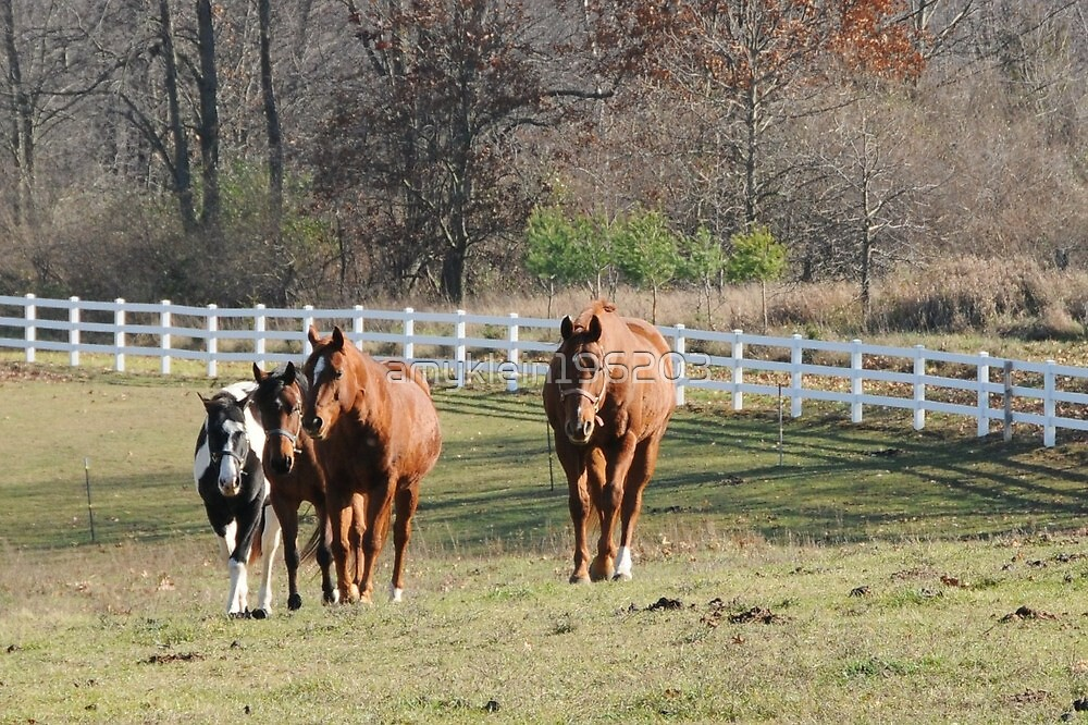 Horses in the Pasture by amyklein196203