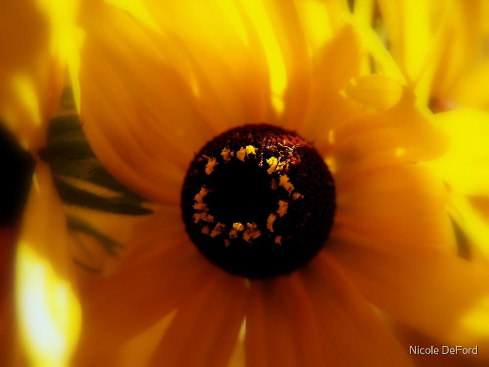 Shining Bright  by Nicole DeFord
