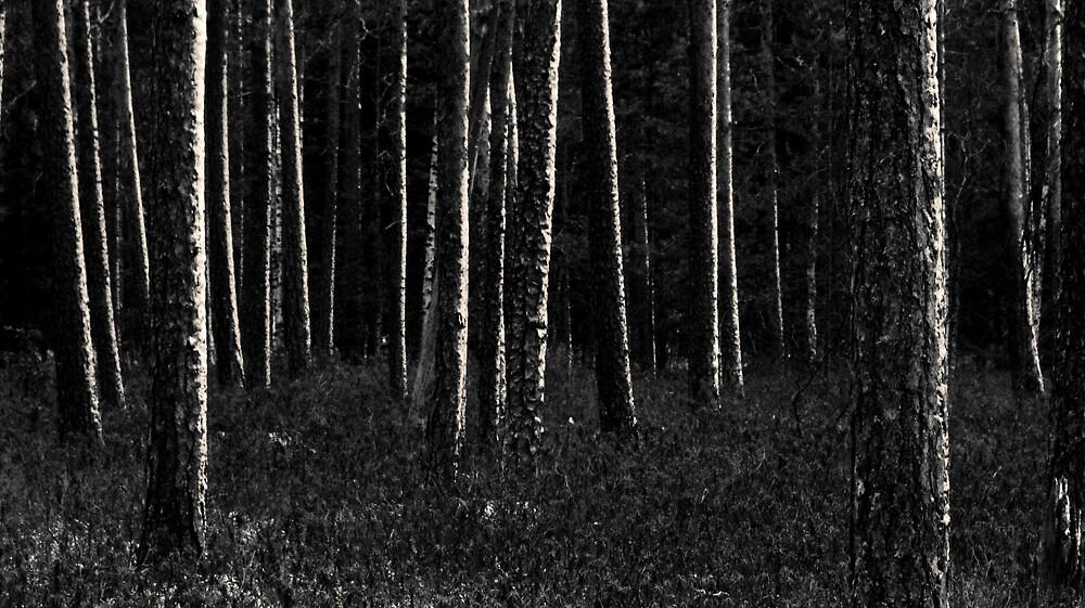 5.11.2009: Dark Days of November by Petri Volanen