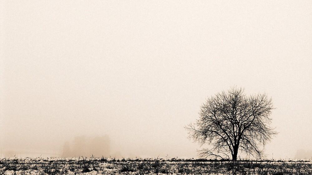 8.11.2009: November Loneliness by Petri Volanen