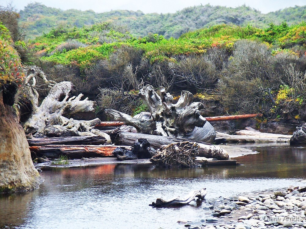 Driftwood, outside Waldport, Ore. by Diane Arndt