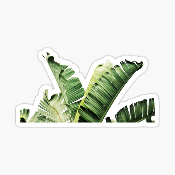 "*FREE SHIP!* 2.5/"" XL Fall Banana Leaves Thank You Stickers Self Seal Adhesive"