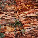 Walls of Zion by Julia Washburn