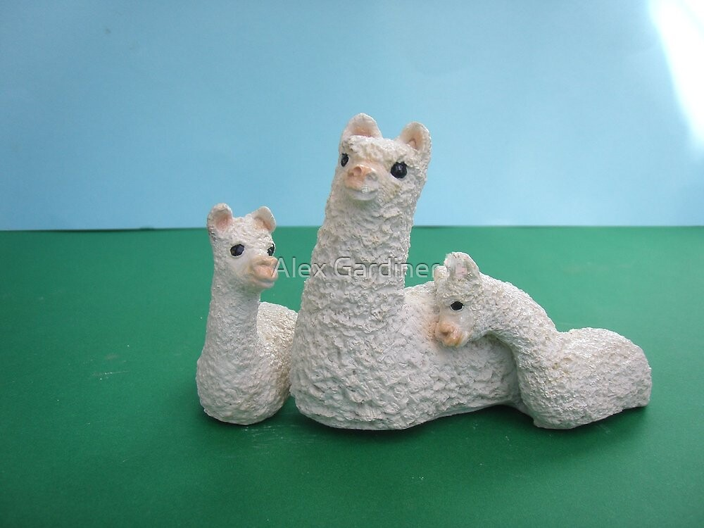 White Mum and twin Alpaca's by Alex Gardiner