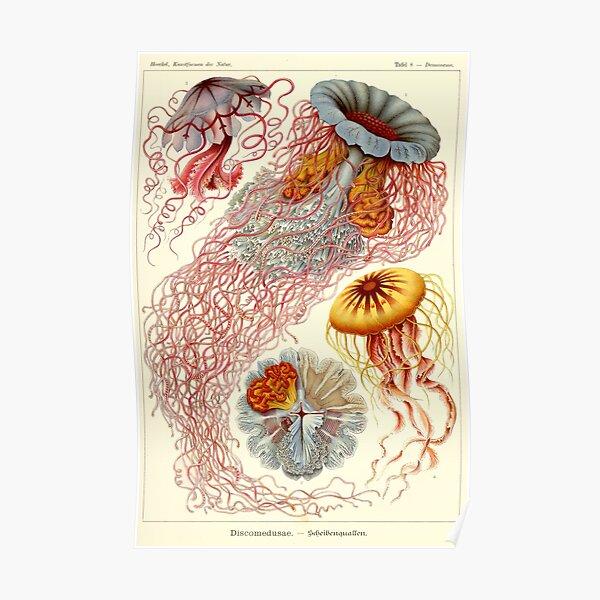 Vintage Jellyfish Poster Haeckel Print Poster