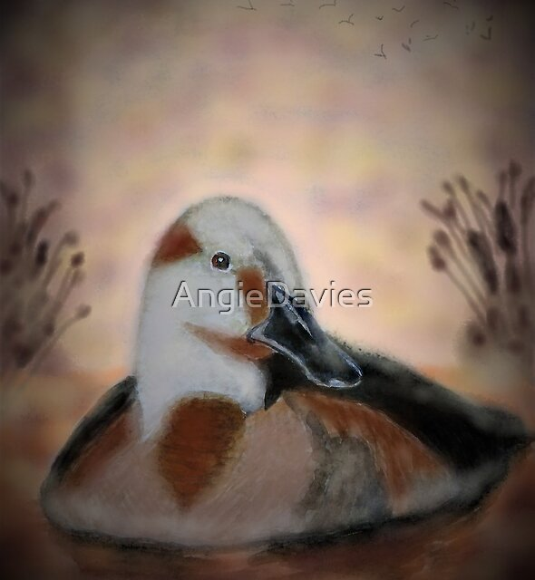 Canvasback Dawn by AngieDavies
