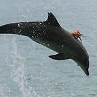 Octopus Hitching A Ride On A Bottlenose Dolphin by Jodie Lowe